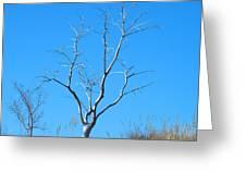 Shimmering Tree Greeting Card