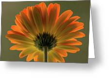Shine Bright Gerber Daisy Square Greeting Card