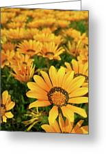 Shine Brighter Together Greeting Card