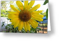 Shine Sunflower Shine Greeting Card
