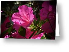 Shining Azalea Greeting Card