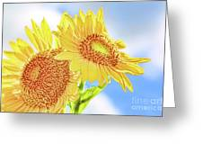 Shining Sunflowers Greeting Card