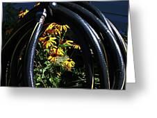 Shiny Black Tire Surrounding Black Eyed Surrounding Black Eyed Susans Bluish Background 2 932017 Greeting Card