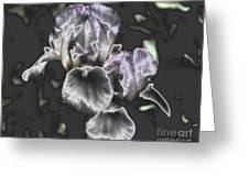 Shiny Irises Greeting Card