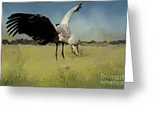 Shoebill Landing Greeting Card