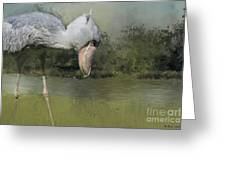 Shoebill Looking For Food Greeting Card