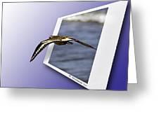 Shore Bird In Flight Greeting Card