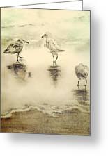 Shore Birds At Sunset Greeting Card