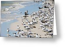 Shorebird Gathering Greeting Card