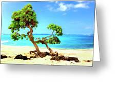 Shoreline At Makalawena Greeting Card