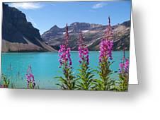 Shoreline Beauties Greeting Card