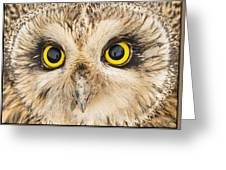 Short-eared Owl Face Greeting Card