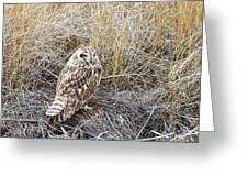 Short Eared Owl Greeting Card by Michael Chatt
