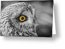 Short-eared Owl Mono Coloured Eye Greeting Card