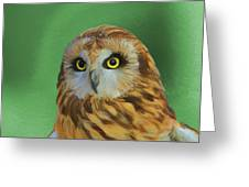 Short Eared Owl On Green Greeting Card