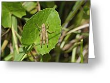 Shortwinged Green Grasshopper Greeting Card