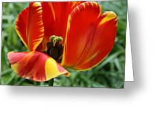 Show Your Heart Greeting Card