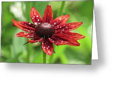 Shower Flower Greeting Card