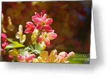 Shower Tree Blossoms Greeting Card