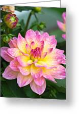 Showered Beauty Greeting Card