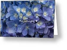 Showered Hydrangeas Greeting Card