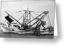 Shrimp Boat In Black And White Greeting Card