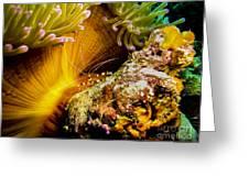 Shrimp Vogue Greeting Card