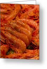 Shrimps Greeting Card