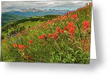 Shrine Pass Wildflowers Greeting Card