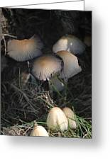 Shrooms 1 Greeting Card