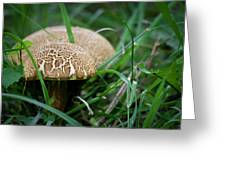 Shrooms Hiding Greeting Card