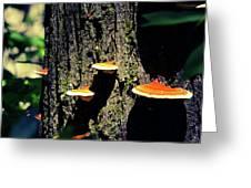Shroomtree Greeting Card