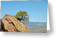 Shrub And Rock At Canon City Greeting Card