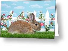 Shy Brown Dwarf Bunny Portrait Greeting Card