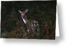 Shy Fallow Deer 4 Greeting Card