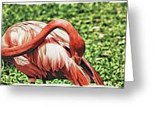 Shy Flamingo Greeting Card