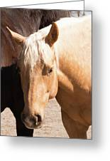 Shy Horse Greeting Card