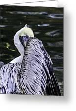 Shy Pelican Greeting Card