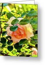 Shy Rose Greeting Card