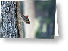 Shy Squirrel Greeting Card