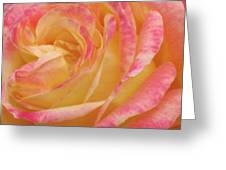 Shy Yellow Rose Greeting Card