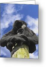 Siamang Gibbon Greeting Card