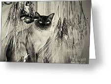 Siamese Cat Posing In Black And White Greeting Card
