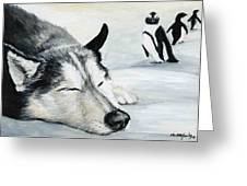 Siberian Huskey Greeting Card