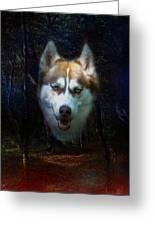 Siberian Husky Greeting Card by Brian Roscorla
