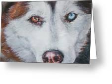 Siberian Husky Red Greeting Card by Lee Ann Shepard