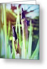 Siberian Iris Bud Greeting Card