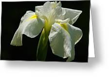 Siberian Iris Greeting Card