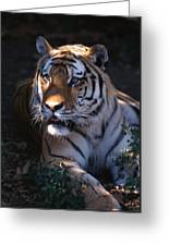 Siberian Tiger Executive Portrait Greeting Card