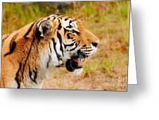 Siberian Tiger In Profile Greeting Card